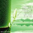 2月19日(月)雨水、プロレスの日、晴れとるよ。(^_^;)