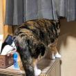 冬の出窓猫♪