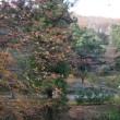 鐘撞堂山(谷津池口)~深谷市、 御嶽山(金讃神社口)~神川町