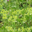 4月の庭の雑草