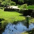 モネのスイレン池