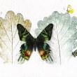 Madagasucan Sunset Moth