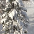 昨日からの雪で