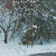 昨日午前の吹雪は・・・「お~いっ、ホワイトザウルス」何処へ。