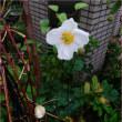 愛しい雨の庭*