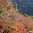 岩古屋山 紅葉 3