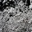 <真冬の景色!!!>