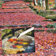花彩々  紅葉まっしぐらです