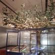 松戸「21世紀の森と広場」探索