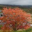 紅葉の小諸散歩・・・飯縄山公園「歴史の広場」・・・富士見城址にのぼる