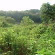 土曜の朝は増水中の矢作川