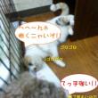 2017 11/17★今日はライム君と樹莉ちゃんとパール君です!!
