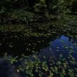 深山の池にて