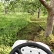 1回目の草刈り
