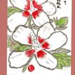 優しくて風情のある木槿の花