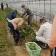 農研、茄子・ピーマン収穫、秋冬野菜追肥、ホウレンソウ収穫、面談