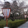 桜祭り準備