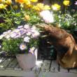 熊ちゃんのような皮付きタケノコとお花たち