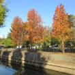 色付き始めた地元の紅葉