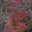 あまり知られていない山中の隣峰苑の紅葉、見事です。