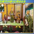 枚方の伝統 「菊花展今が盛りと和ませる」