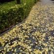 ひと雨毎に、秋が去って行く。玉泉園付近。