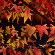 「名残の秋彩」 いわき 夏井川渓谷にて撮影! 楓の紅葉