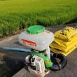 ハツシモ米追肥作業します
