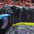 『翡翠』 苔石