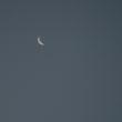 朝焼け、月、雲、きれいなパーツ