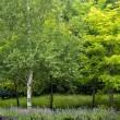 蒜山のハーブ園 HerBill