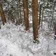 白い綿の花の森