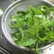 今日の野菜収穫9種類と料理3品