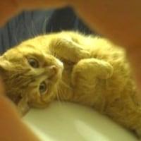 猫好きマコちゃん