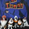 11月の【ALOHA塾】チョークアートぷちレッスン♪  犬のしつけ教室@アロハドギー