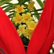 ちっちゃい花を中心に