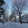 雪の朝!!