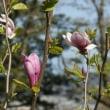 みちのく櫻紀行(東北さくら絵巻)五:風光る阿武隈川や長き貨車