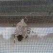カメムシと蛾