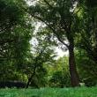 穏やかな初秋の上野公園です 其の3