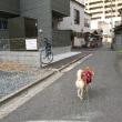 路地裏散歩