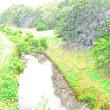 今日の野川🏞