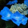 花が告げる季節のめぐり