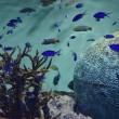 きれいな写真を一眼で ②/ 《葛西臨海水族館》