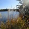 牧野が池緑地ウォーキング