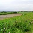 利根川の堤防