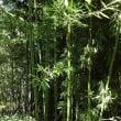 美しき竹林