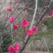 春がやってきた(^^)/