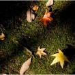 秋の日差し 苔に落ち葉 その2