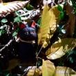 小春日和の猫の森へ、ようこそ〜